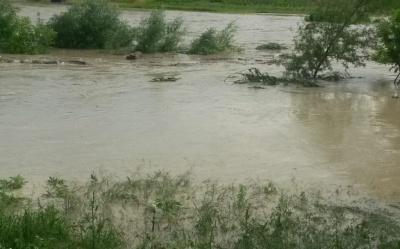 Негода на Буковині: річка вийшла з берегів та підтопила будинки – відео