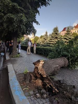 У Чернівцях на Театральній площі впало дерево - фото