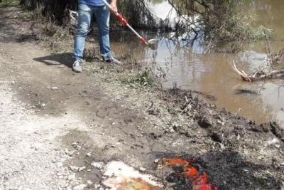Інсектицид «Нурал-В» у річці Рось не знайшли