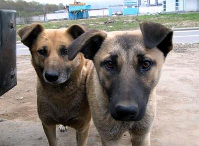 У Чернівцях охочих кличуть рахувати безпритульних собак