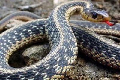 На Львівщині жінка потрапила до реанімації через укус змії