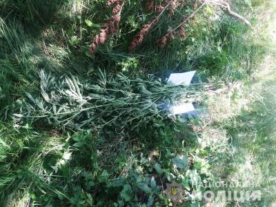 На Буковині у 60-річної жінки вилучили рослини коноплі