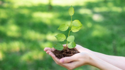 У Чернівцях пропонують започаткувати традицію висадки дерев випускниками шкіл та вузів