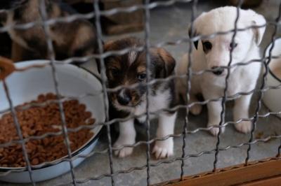 У Чернівцях міськрада підтримала е-петицію щодо припинення жорстокого вбивства собак
