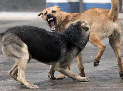У Чернівцях побільшало безпритульних собак, – дослідження