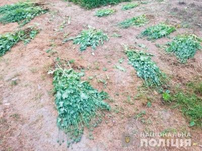 На Буковині поліцейські зафіксували три випадки незаконного вирощування маку