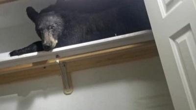 Ведмідь вдерся в будинок до американської сім'ї і заснув у шафі