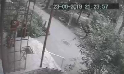 У Чернівцях чоловік натравив бійцівського собаку на кота, пес загриз тварину – відео
