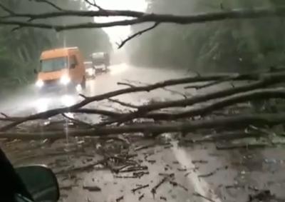 Негода на Буковині: на автотрасі впало дерево, утворився затор – фото