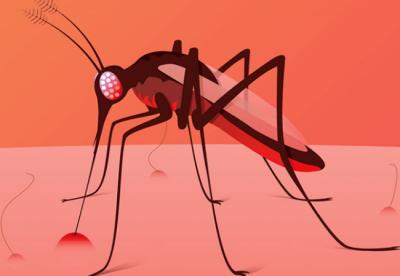 Алергія на комарів: 6 ознак, що це ваш випадок