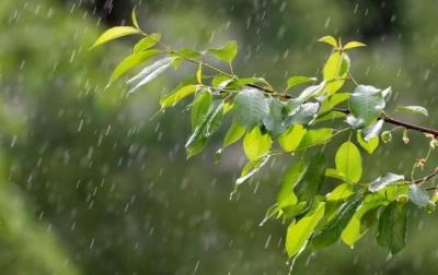 Похолодання і дощі: синоптики розповіли, якою буде погода на Буковині
