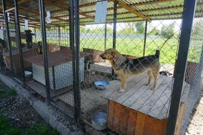 У Центрі стерилізації тварин у Чернівцях хочуть прилаштовувати якомога більше собак