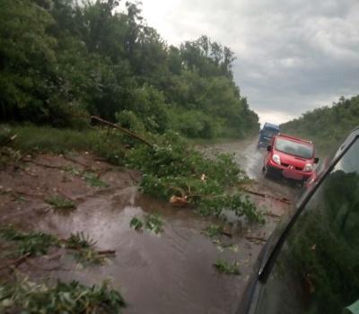 На Буковині буревій поламав дерева вздовж траси: рух місцями ускладнено - фото