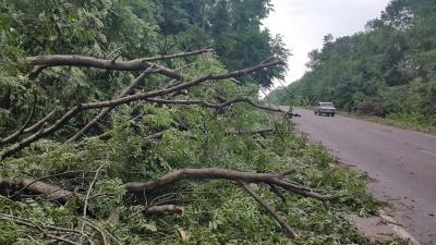Негода на Буковині: чоловік і жінка травмувались через падіння дерева