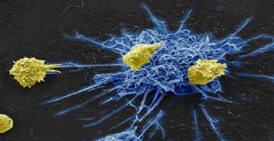 Учені вперше знищили ВІЛ у всьому геномі мишей