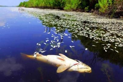 У водоймах Буковини можливий масовий мор риби: відома причина