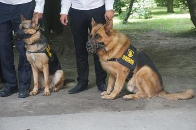 У Чернівцях відсвяткували річницю Національної поліції: як це було - фото