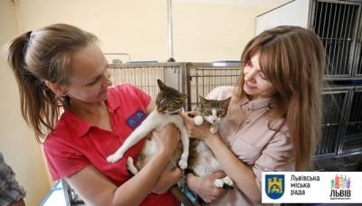 У Львові підрахували вуличних котів