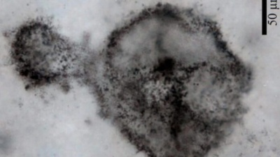 Вчені знайшли загадкову форму життя віком 2,5 мільярда років