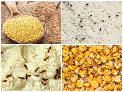 На ринках Буковини виявили 40 кг кукурудзяної крупи із комахами