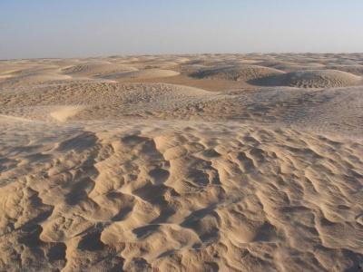 Пустеля Сахара була морем, в якому жили найбільші у світі істоти: дослідження