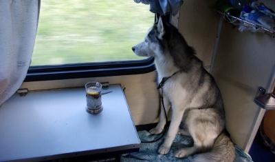 У Польщі пес на поїзді втік від господарів до своєї коханої