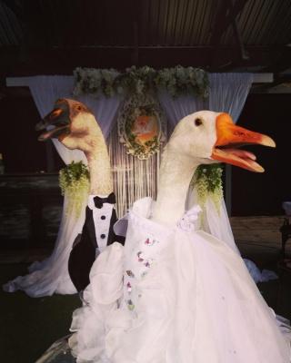 У Мінську одружили двох гусей попри заборону влади