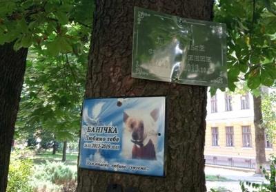 У Чернівцях під вікнами СБУ облаштували «кладовище для тварин» – фото
