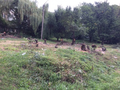 У Чернівцях у спальному районі масово вирубують дерева: мешканці лютують