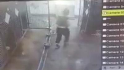 У Чернівцях працівниця Центру стерилізації тварин била і знущалась із собак – відео