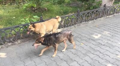 У центрі Чернівців на жінку напав безпритульний собака
