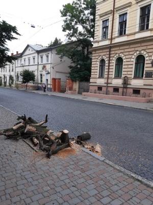 У центрі Чернівців зрізали клени, на які скаржились водії маршруток – фото