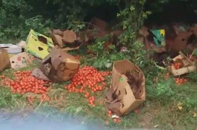 «Чому не роздали людям?»: у Чернівцях невідомі викинули велику партію помідорів на березі Пруту