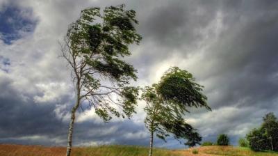 Штормове попередження: сьогодні на Буковині очікується сильний вітер