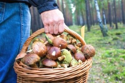 На Буковині жінка потрапила до реанімації після споживання грибів