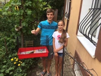 У Чернівцях небайдужі врятували та вилікували пташеня - відео