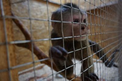"""""""Наші тваринки все розуміють"""": у Чернівцях відкрили виставку екзотичних тварин"""