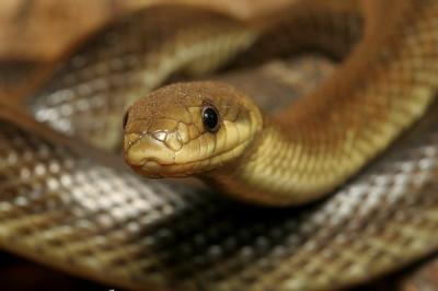 На Буковині чоловіка під час збирання сіна вкусила змія