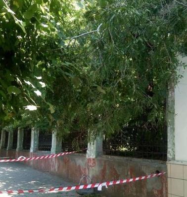 У центрі Чернівців на перукарню впало дерево