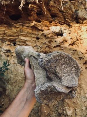 Чернівецький науковець знайшов кістки вимерлого волохатого носорога – фото