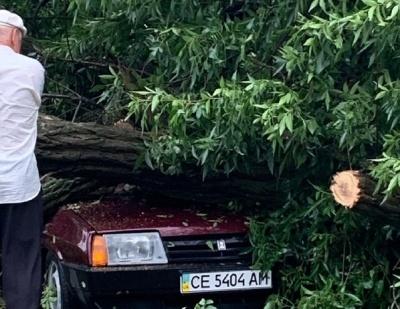 Негода на Буковині: автівку придавило деревом