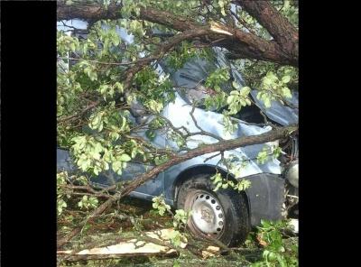 На Буковині дерево розтрощило мікроавтобус під час руху