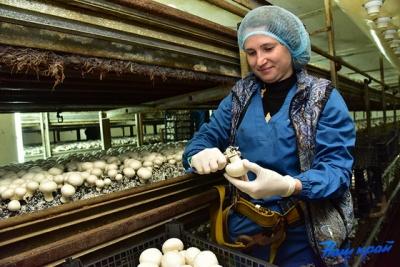 Шукають грибоводів і формувальників ковбас: як рідкісні професії пропонують буковинцям