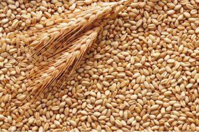 Ціни на пшеницю в Україні знизяться