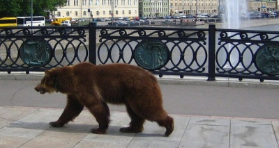 У фінську школу прийшов ведмідь
