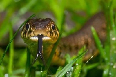 На Буковині змія вкусила 18-річного юнака