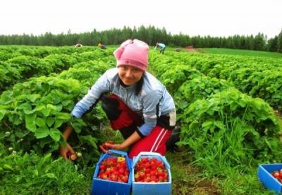 У Польщі працює майже півмільйона українських заробітчан