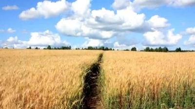 Скільки коштує земля: Буковина – в списку «найдорожчих» регіонів