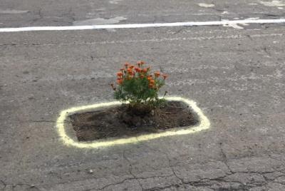 Замість асфальту чорнобривці: на Буковині креативно звернули увагу на стан доріг