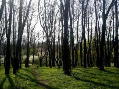 У парку імені Шиллера в Чернівцях почистять аварійні дерева й чагарники